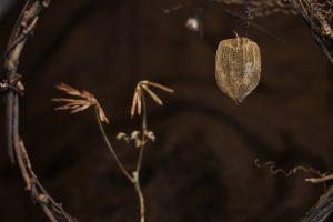 Samen Blüten RIng